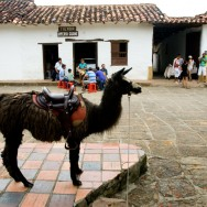 Lõuna-Ameerika ratsu